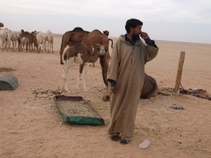 Awala Lahbib, Acting Director of ASAVIM, herding camels near the Smara refugee camp. Featured image: Awala Lahbib in a tent in the Smara camp